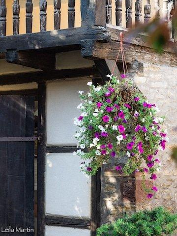 Fleurs à La Cour de Lise à Willgottheim